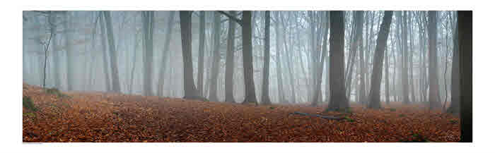 Foggy Forest of Dean copyright keefhickeyphotography.com